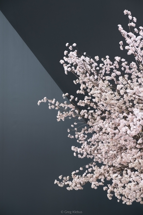 Minimalistic Sakura Harajuku, T - gklebus | ello