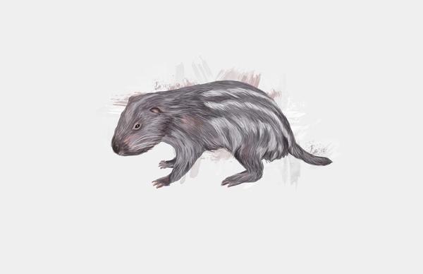 animals, guagua, illustration - ricardomacia | ello
