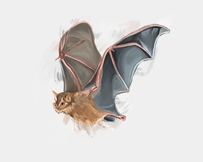 bat, animal, illustration, art - ricardomacia | ello