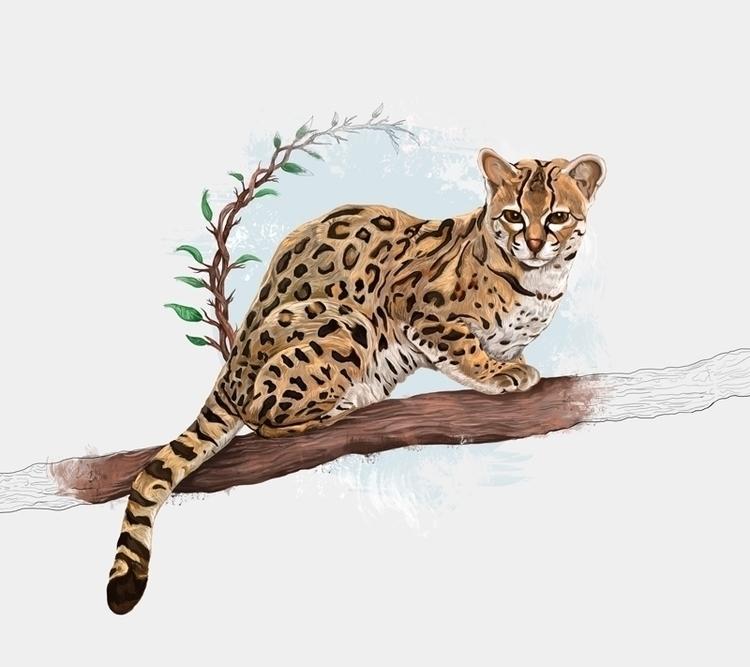 Tigrillo, animal, art, illustration - ricardomacia | ello