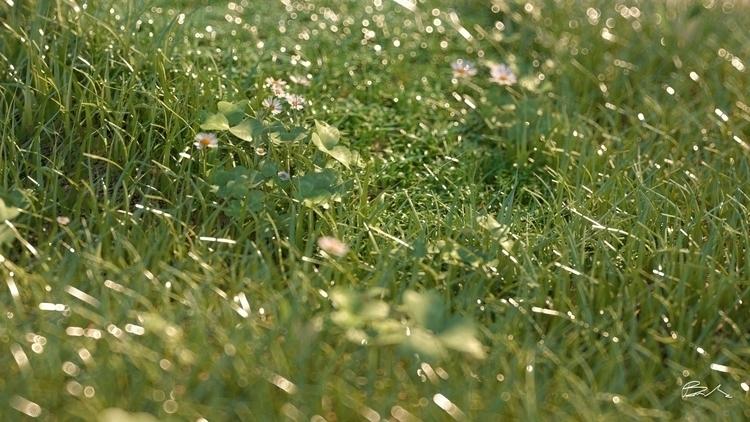 CGI GRASS - grass, octanerender - b3d-1446 | ello