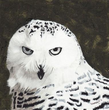 Snowy Owl - painting - brandyhouse | ello