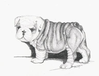 Bull Dog pup - drawing - brandyhouse | ello