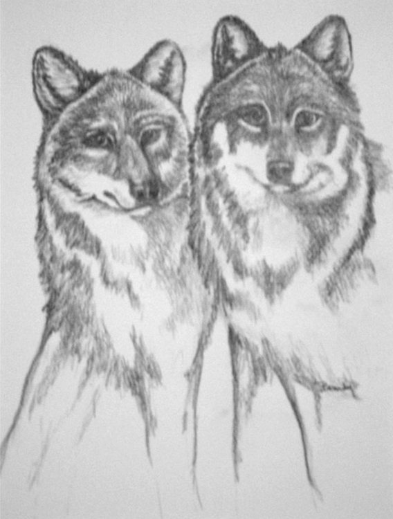 Wolf Pair - drawing - brandyhouse | ello