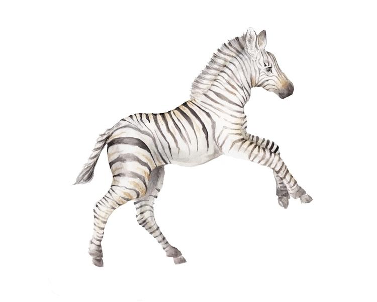love zebras - zebra, zebrawatercolor - wanderinglaur | ello