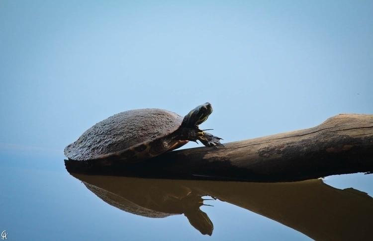 Check work portfolio: Turtle La - caphotography | ello