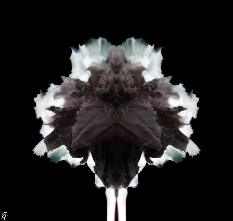 Check work portfolio: Floral - photography - caphotography | ello