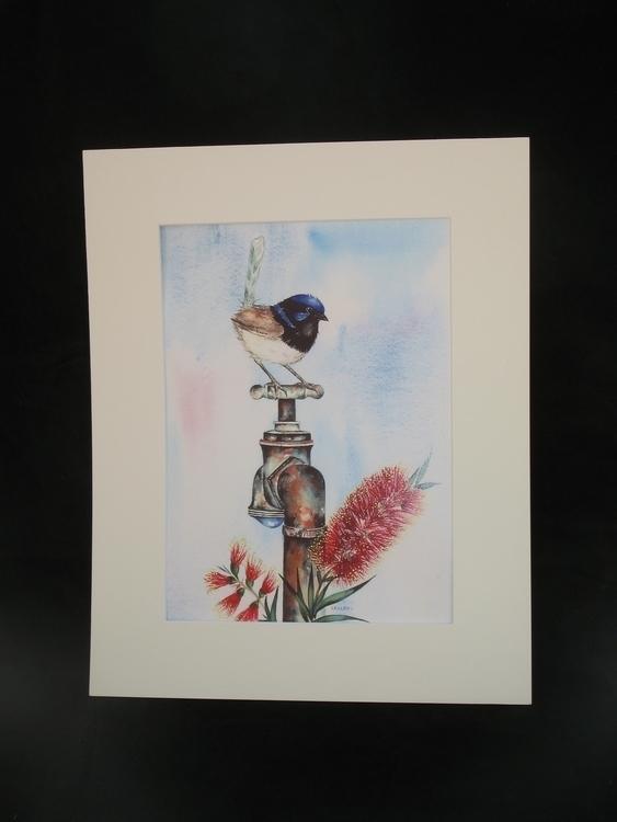Blue Wrens Tap - suzanne88 | ello