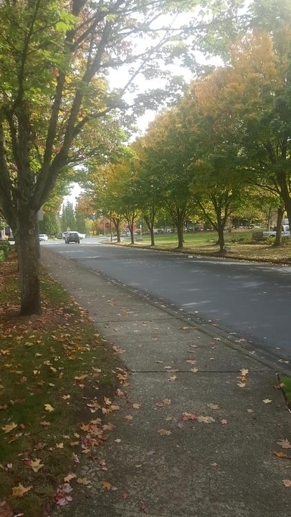 walk Redmond, WA - littleduffer20   ello