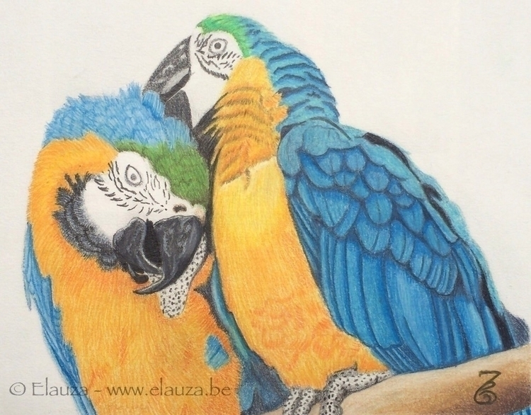 Parrots love - drawing, art, coloredpencil - elauza | ello