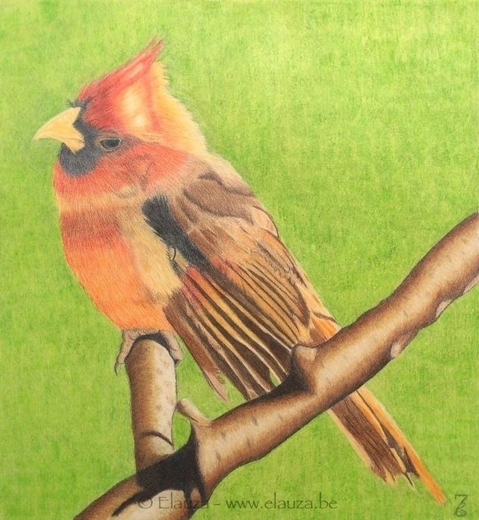 Red Cardinal Polychromos canson - elauza | ello