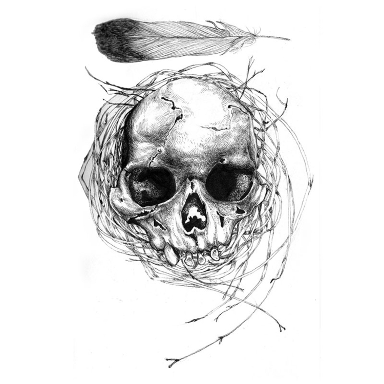 Feather - illustration, drawing - karolina-4327   ello