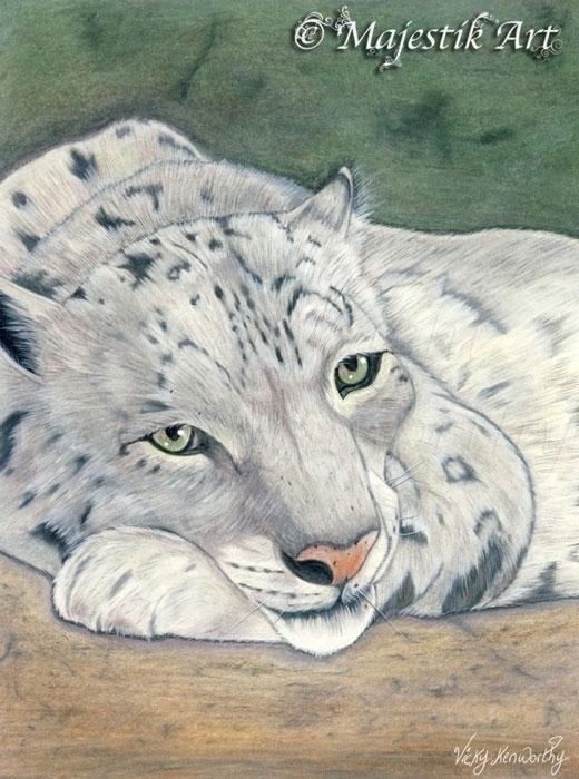 Reflection - snowleopard, Animal - majestikart | ello