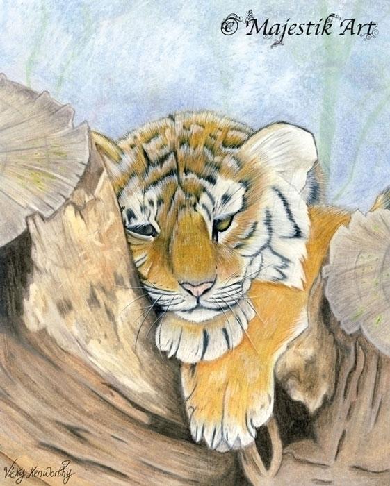 Weary - Tiger, Cub, Animal, Wildlife - majestikart | ello