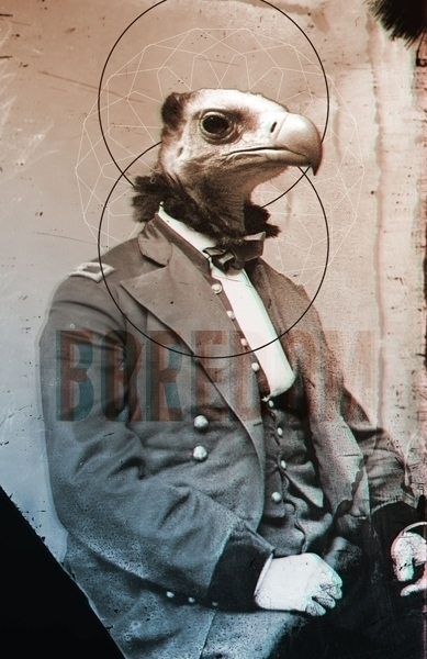 illustration, animal, vulture - omniscientbeing | ello