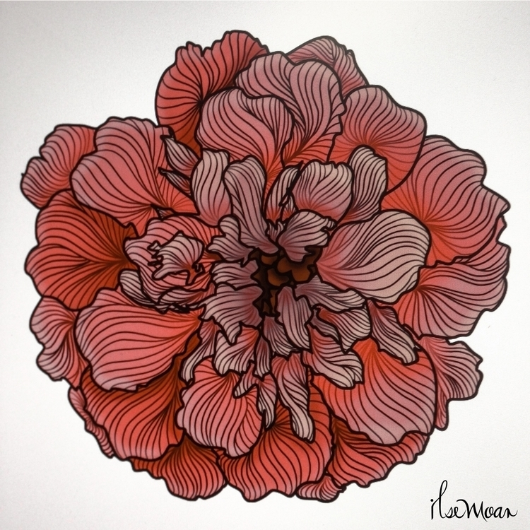 CEMPASUCHIL FLOWER COLOR - digitalart - ilsemoar | ello