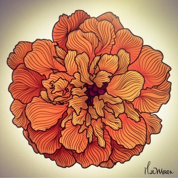 CEMPASUCHIL FLOWER COLOR - digitalillustration - ilsemoar | ello