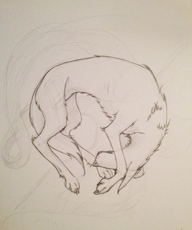 wolf, sketch, drawing, illustration - corinnavargas   ello
