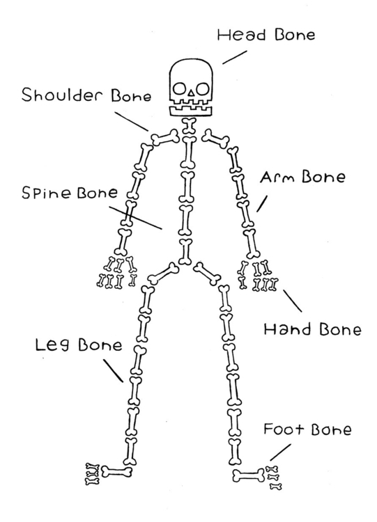 Accurate diagram human skeleton - magicalseaside | ello