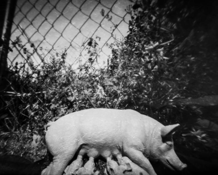 ¡Cuatro Patas Sí Dos Pies - photography - lnavarrogranero | ello