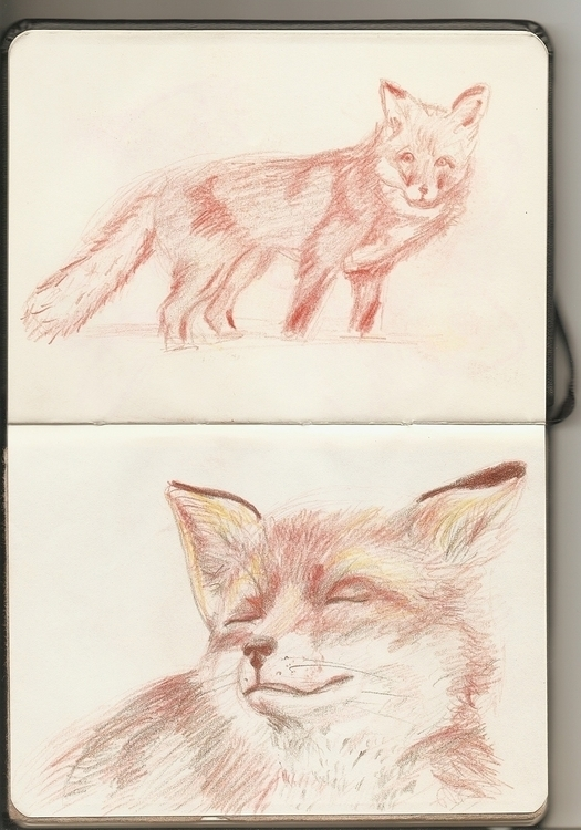 Fox - marianazancheta | ello