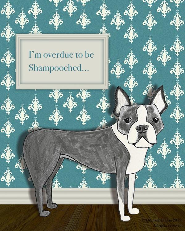 Boston Terrier - illustration, dogs - elizabethboylan   ello
