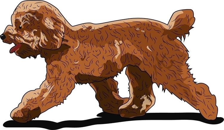 Toy Poodle - dog, vector - itsamebry | ello