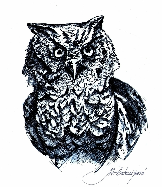 drawing, owls, shadow, pencil - mirjanaantonijevic | ello
