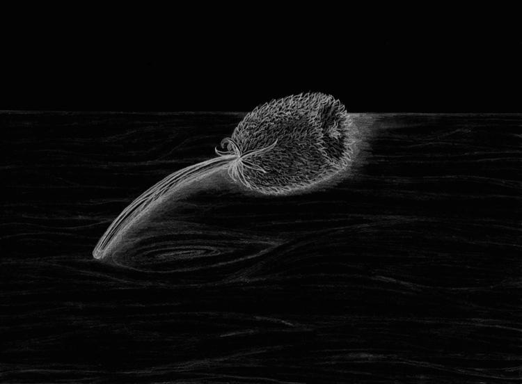 Thistle study - stilllife - steersky-1263 | ello