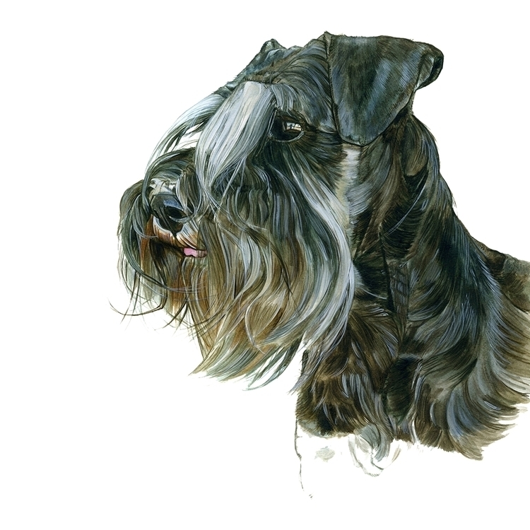 DOG_SCHNAUZER - illustration, watercolor - anne-1202 | ello