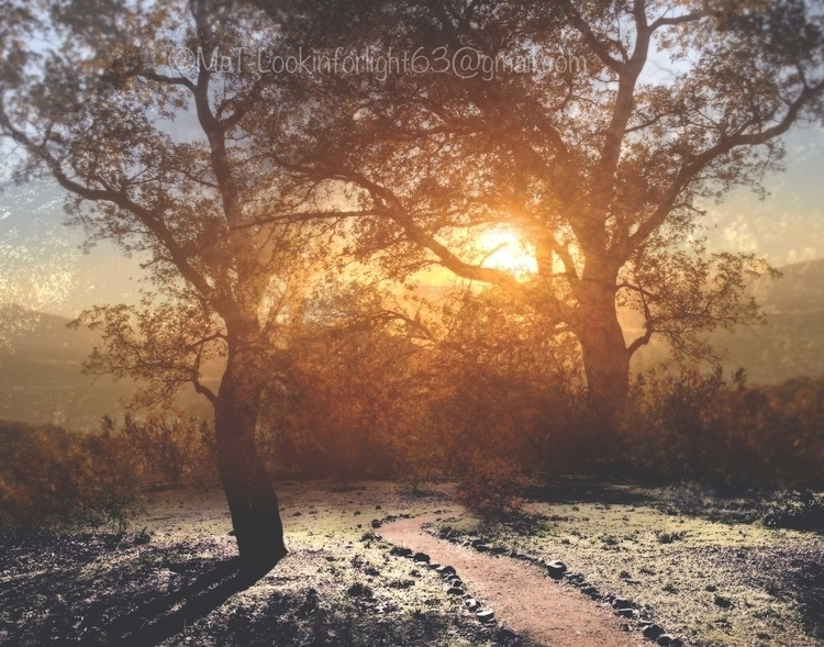 Path Sunset - photography, montage - lookinforlight | ello