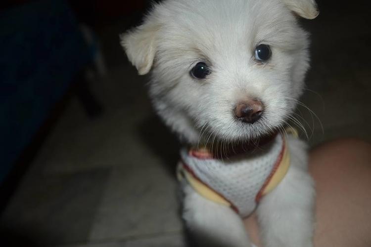 Fluff pup - photography, dog, puppy - fatimaongleo | ello