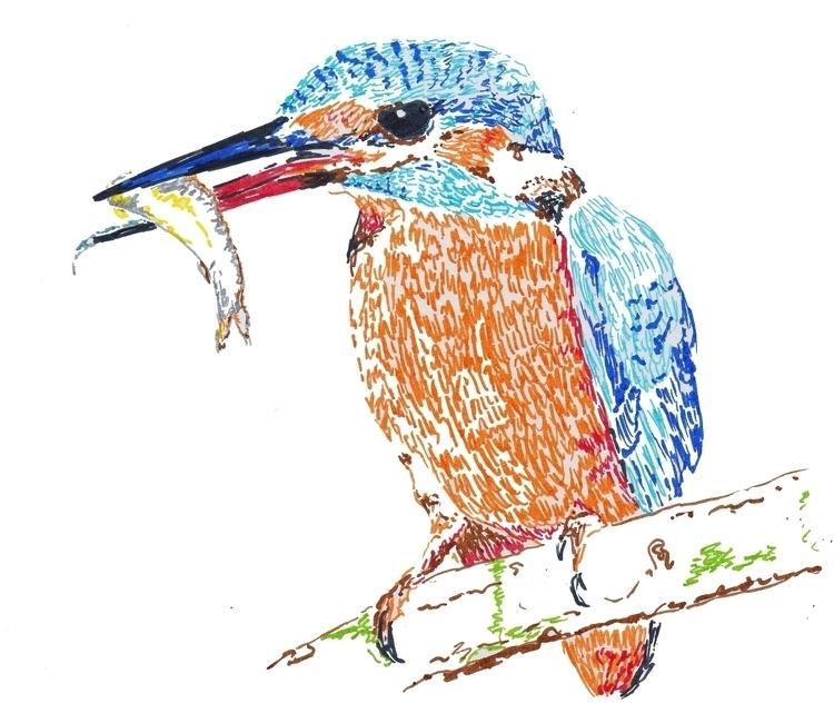 Alcedo atthis - illustration, drawing - somsomni | ello