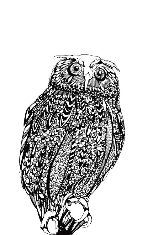 drawing, owl, blackandwhite, doodle - devangari-8254 | ello