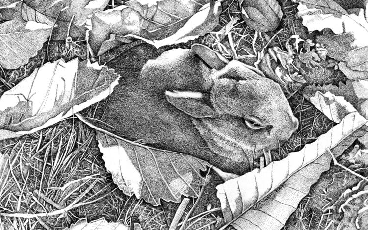 named pen ink Bunny friend Caro - kmwilson-1098 | ello
