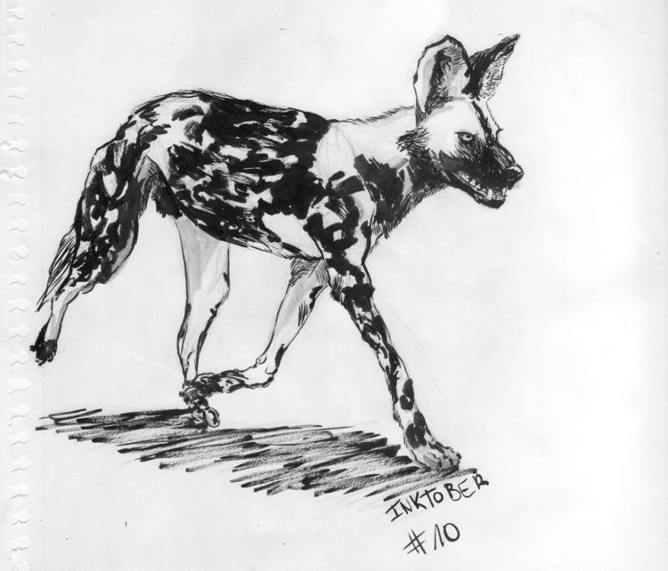 African Wild dog / chien sauvag - juliusiv | ello