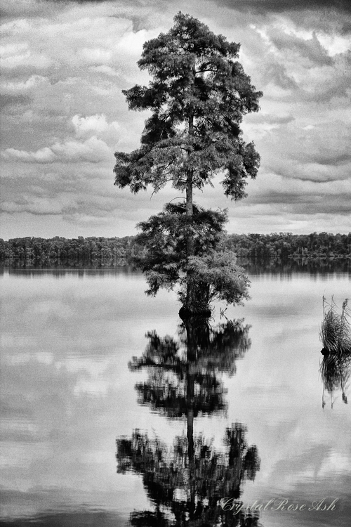 Double vision - tree, trees, lake - crystalrose-5770 | ello