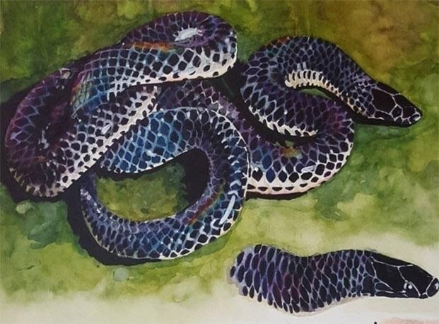 Shieldtail snake - illustration - abby_williams | ello