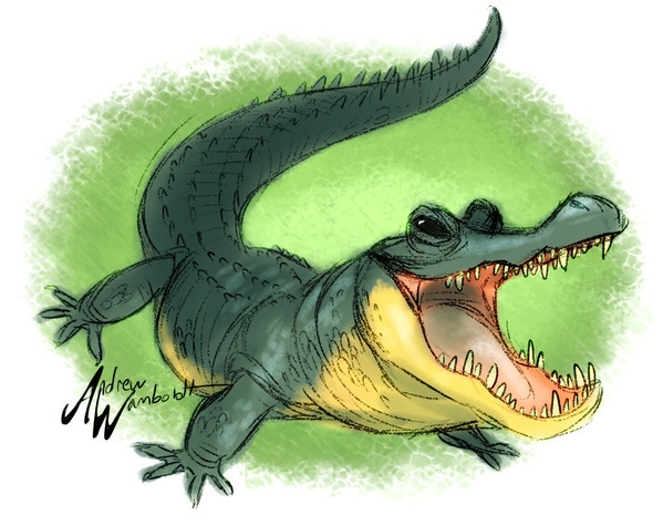 characterdesign, animals, alligator - awamboldt | ello
