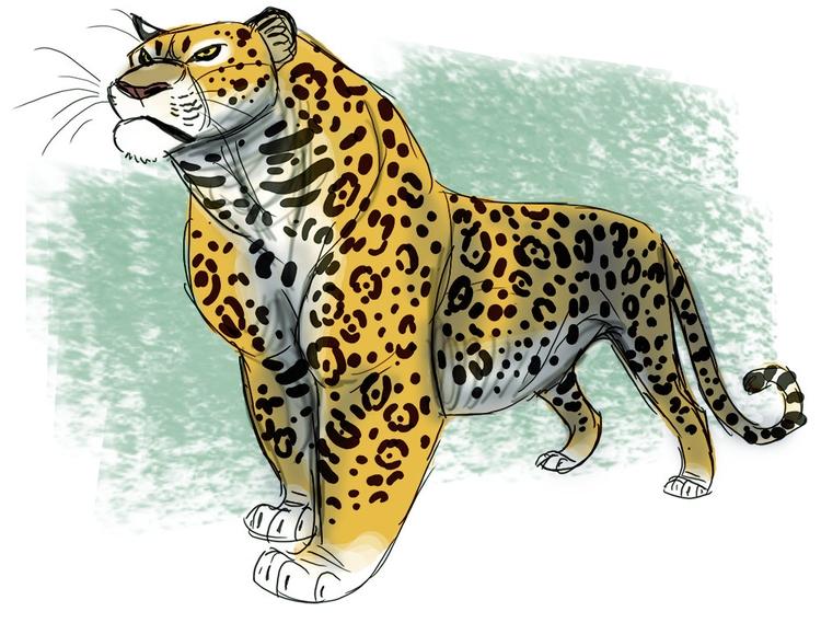 jaguar, animals, characterdesign - awamboldt | ello