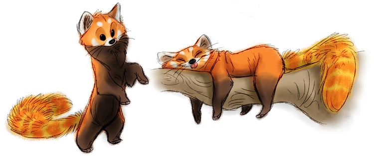 redpanda, animals, characterdesign - awamboldt | ello