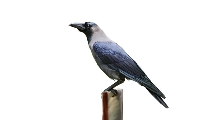 Crow - madguroo   ello
