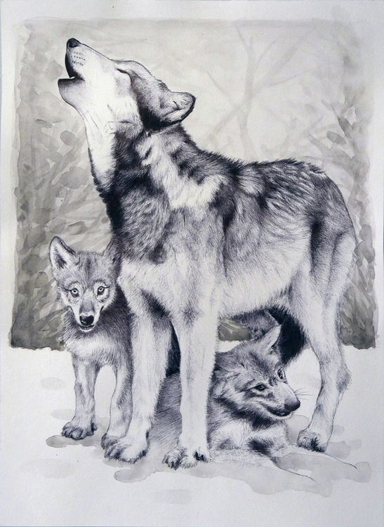 Breeding - wolf, watercolour, pen - ruwett | ello