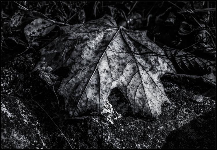 Autumn leaves - photography - andma | ello