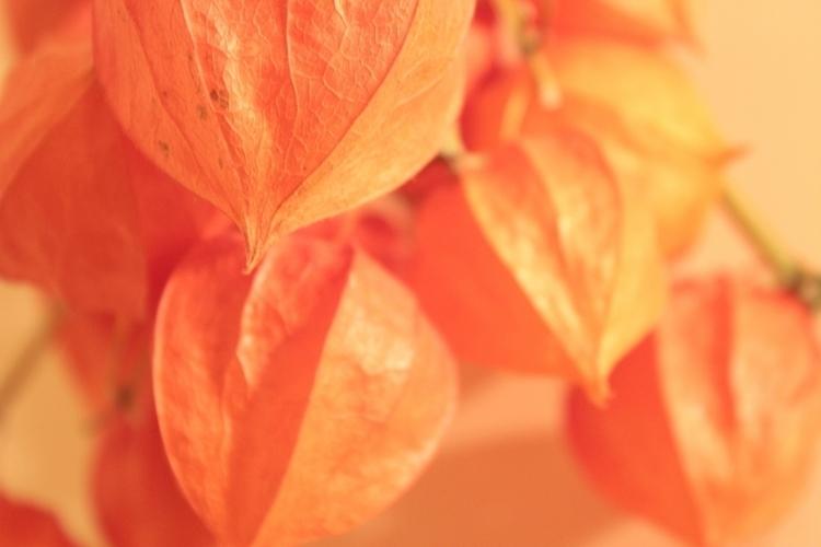???????  - illustration, foto, flowers - natasolo | ello