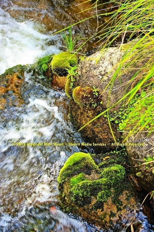 River moss - environment, photography - stuartmedia | ello