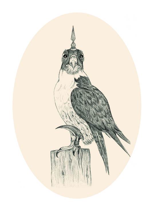 pencil, illustration, falcon - hardknoxcreative | ello