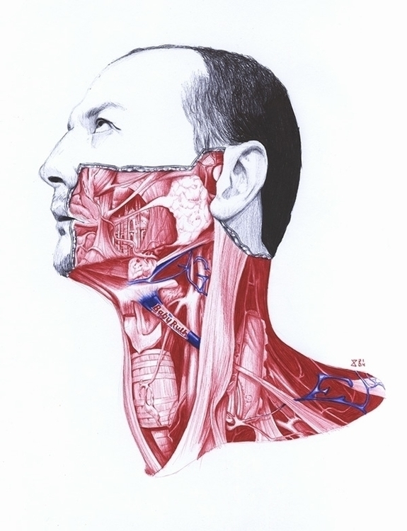 Anatomy ML - portrait, anatomy, pen - zasa-6052 | ello