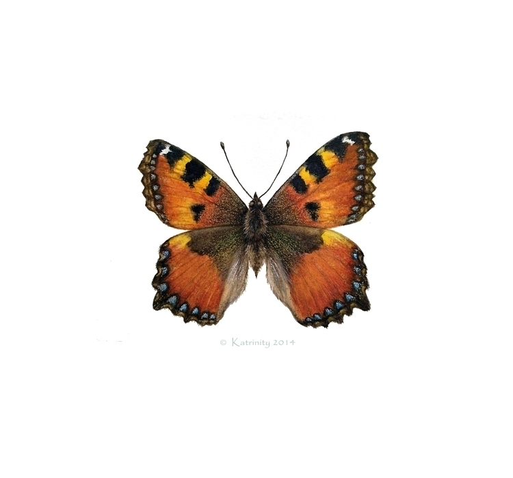 Butterfly - illustration, painting - katrinity-1318 | ello