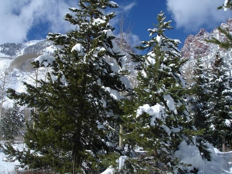 Winter Snow - #photography - kelleyandsusan | ello
